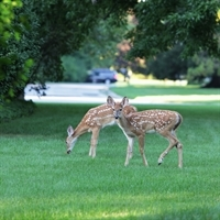 Deer and Wildlife Presentation - Video and Presentation